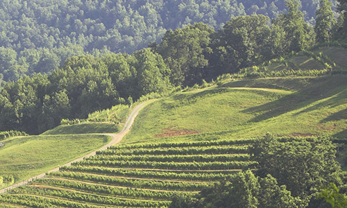 delfosse-winery-music-in-the-mountains