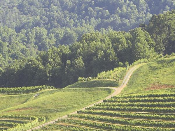 DelFosse Vineyards